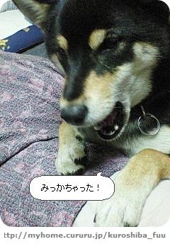 image460260.jpg