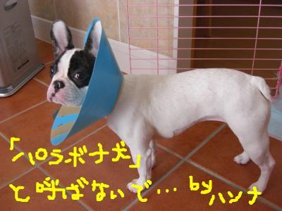 snap_hanna0607_200924115821.jpg