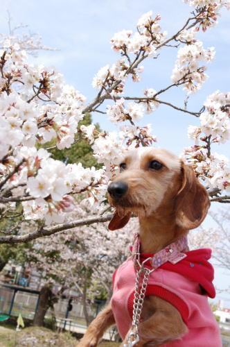 未来と桜さん