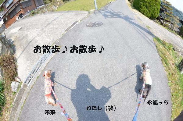2わん散歩