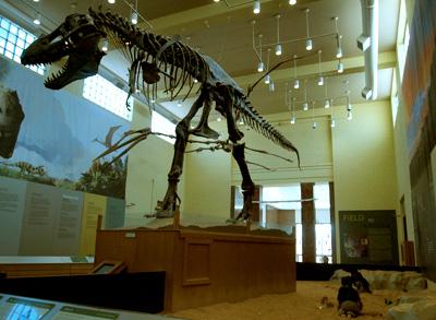 ティラノザウルスの骨