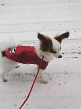 コピー ~ 雪の散歩