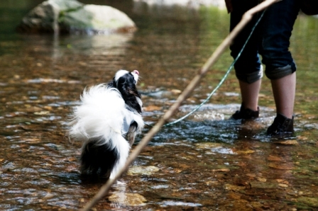 コピー ~ 薬師池の蓮と宮が瀬と川原遊び-120d