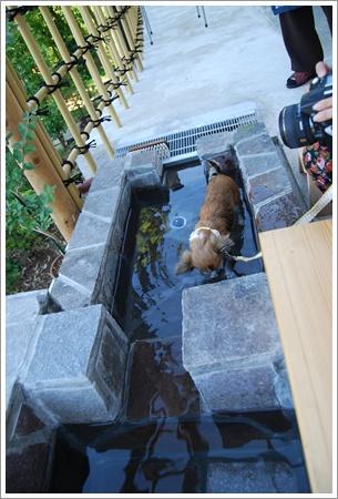 二の平温泉 箱根の森足湯