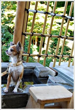 箱根の森足湯