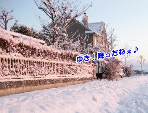 3匹物語,初雪
