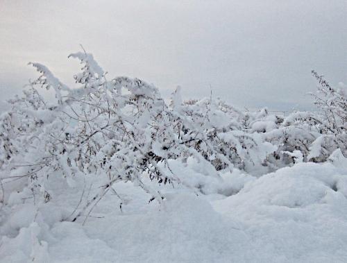 早朝の雪遊び