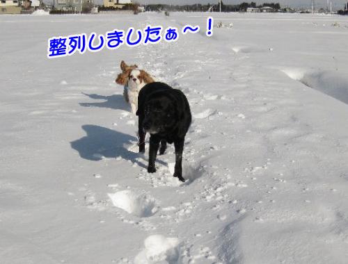 雪と3匹物語