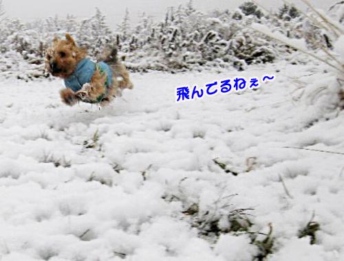 雪のお散歩