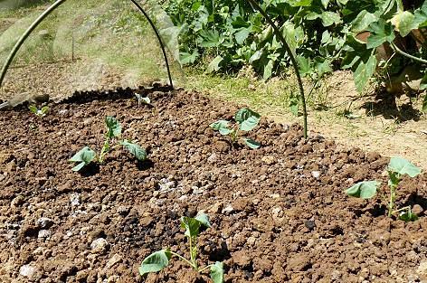 苗を植えて・・・