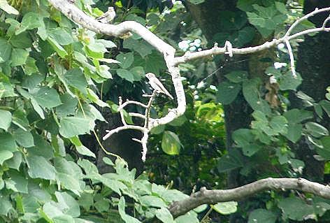 キツツキの木に小鳥♪