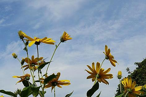 崖に黄色い花と虫♪