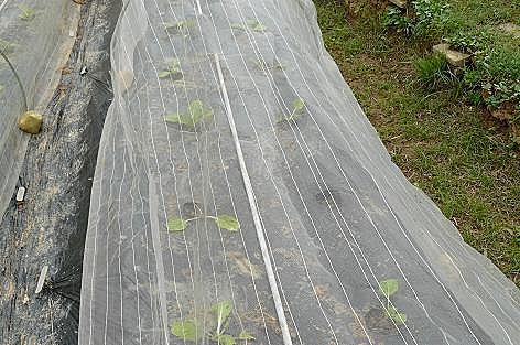 右側は横に土が