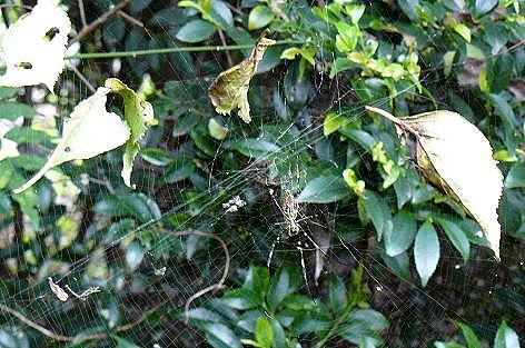 クモの巣と落ち葉♪
