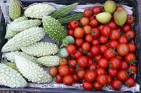 フルーツトマトとゴーヤ♪