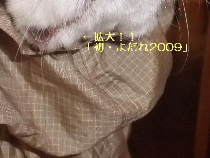 090101ahappynewyear4.jpg