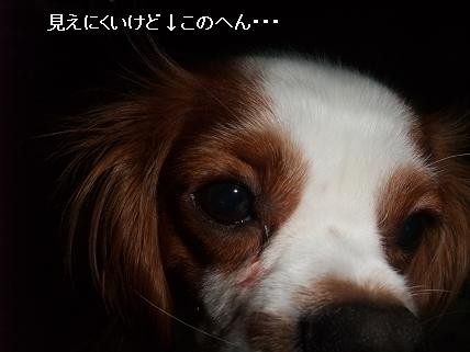 090201hairstyle6.jpg