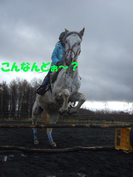 2010_1113cc