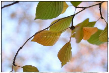 DSC_9998_20101115171615.jpg