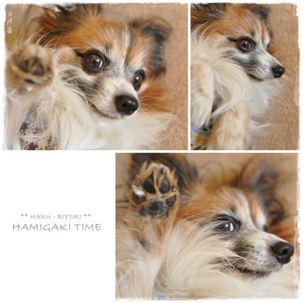 hamigaki-2.jpg