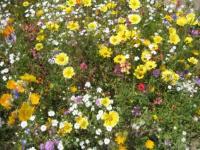 Wild-flowers-03-424x318.jpg