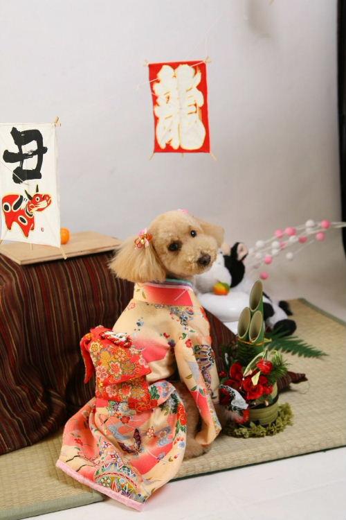 2008年kimon