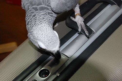 スーツケースの上のChloe