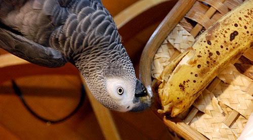 バナナとChloe