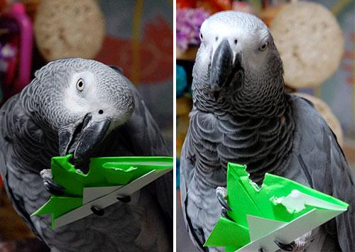 折り紙兜とChloe