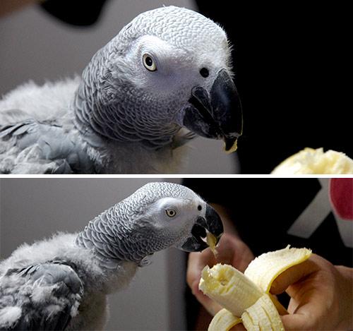 バナナを食べるJean-Luc