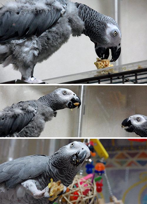 ウッディコーンを食べるJean-LucとChloe