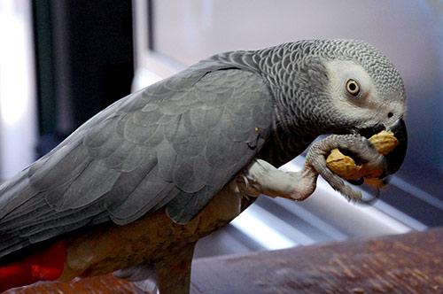 テーブルで落花生を食べるChloe