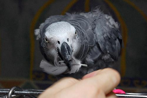 羽根を取り合うJean-Luc