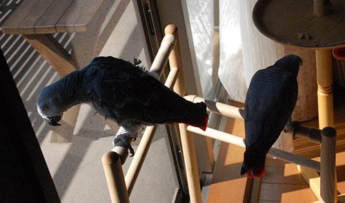 窓辺のJean-LucとChloe