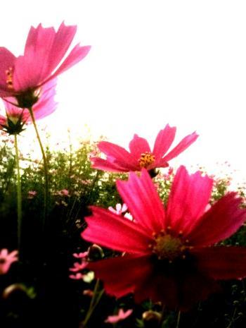 IMG_5249_convert_20090929175649.jpg