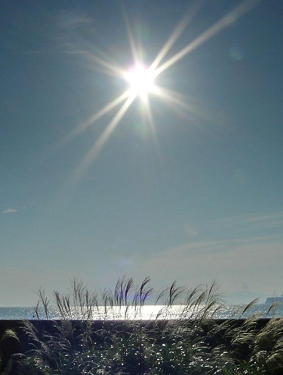 090913海とススキ1