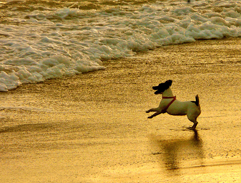 090923犬と遊ぶ渚1