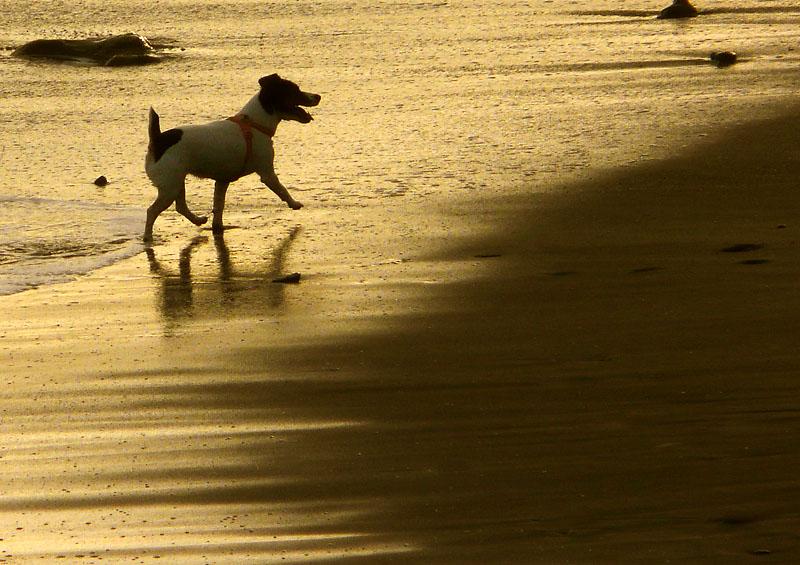 090923犬と遊ぶ渚2