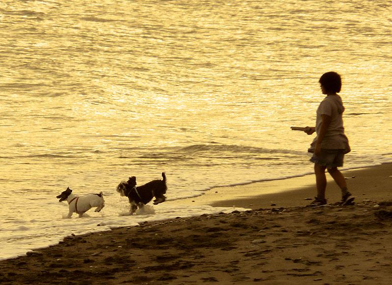 090923犬と遊ぶ渚3