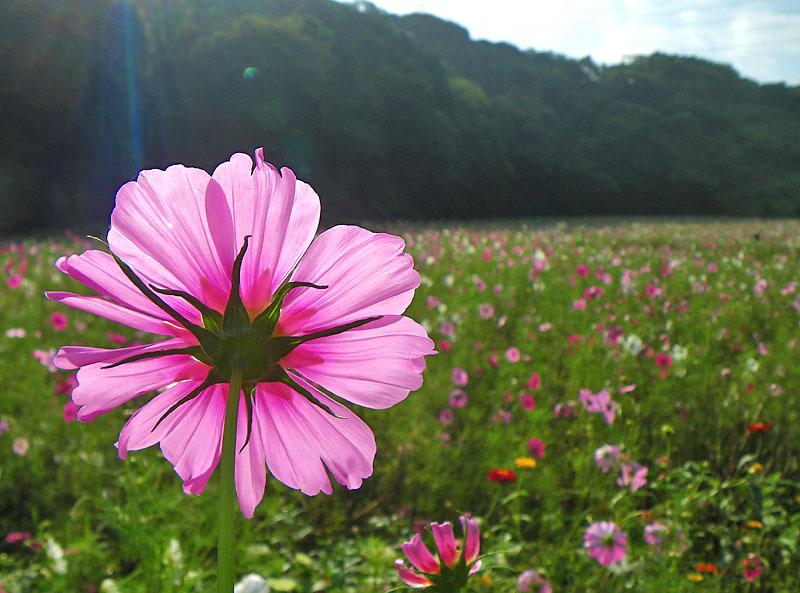091004花の国4