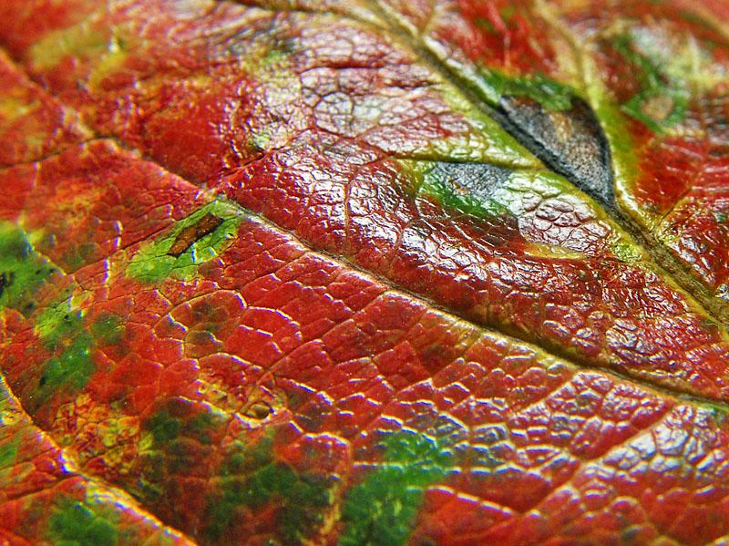 091020柿の葉ステンドグラス3