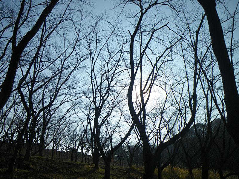 091226冬枯れの公園1