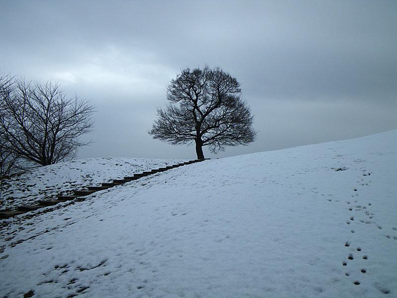 100202雪の榎の丘