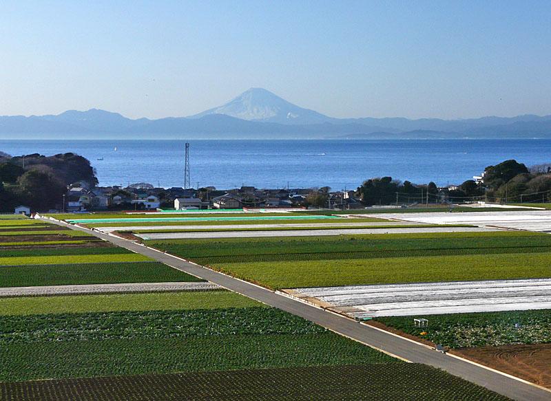 100207三崎からの富士5