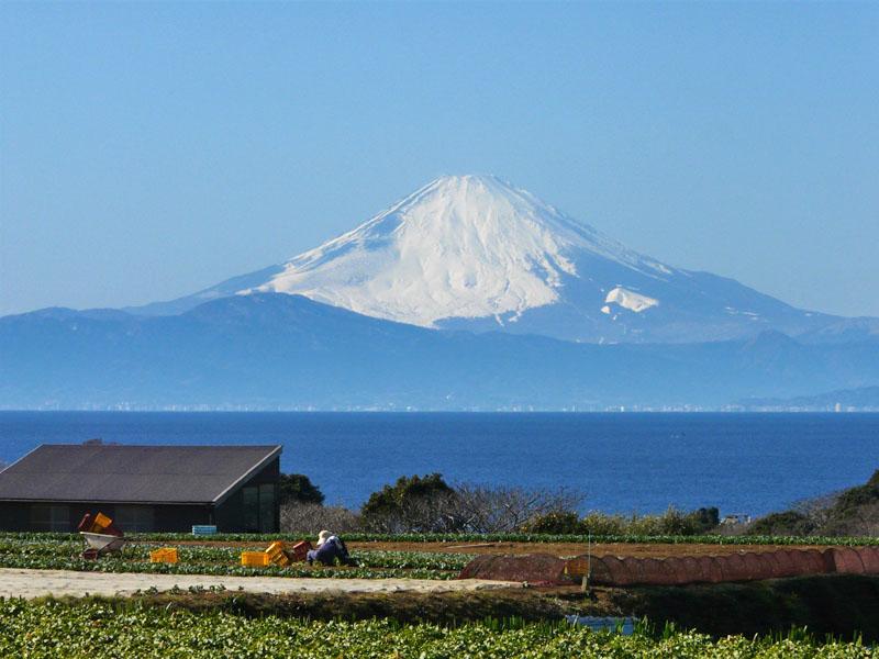 100207三崎からの富士1
