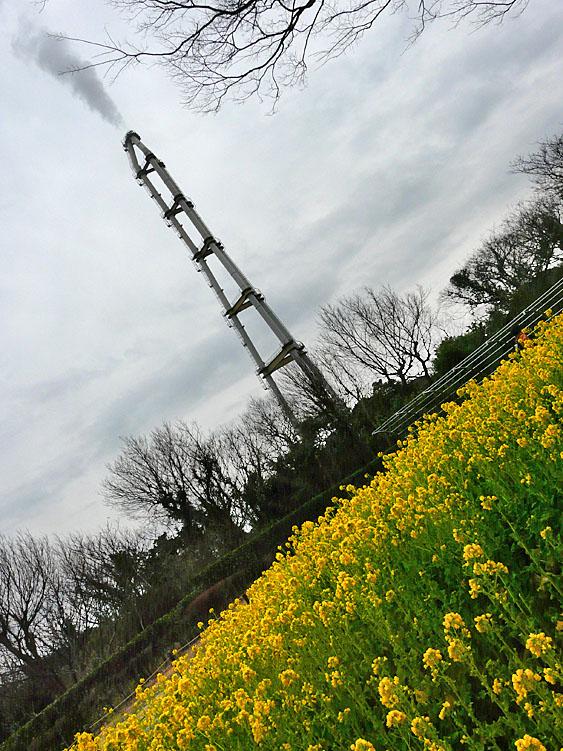 100214今日の花の国1