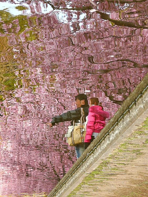100221河津桜3.5