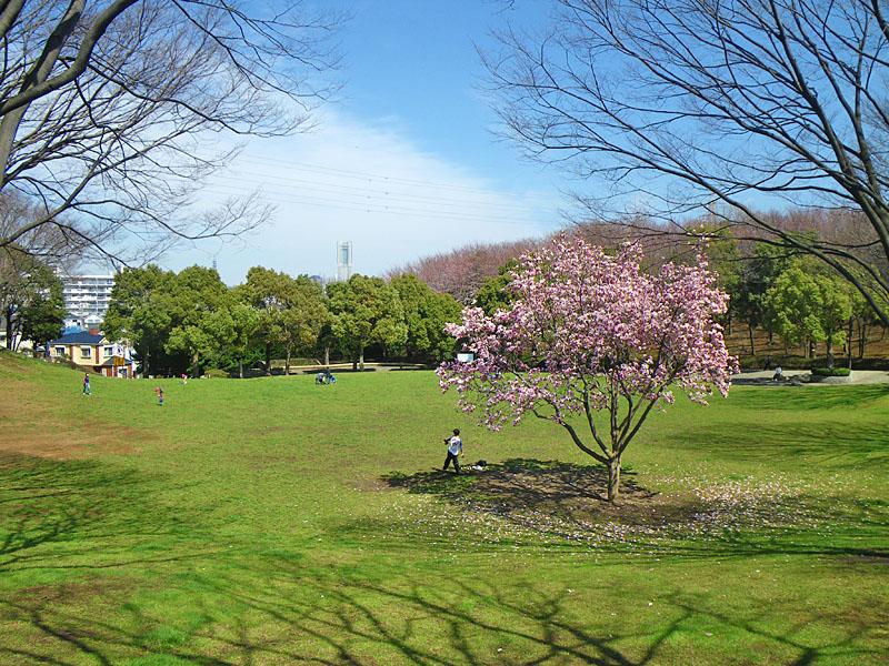 横浜緋桜2
