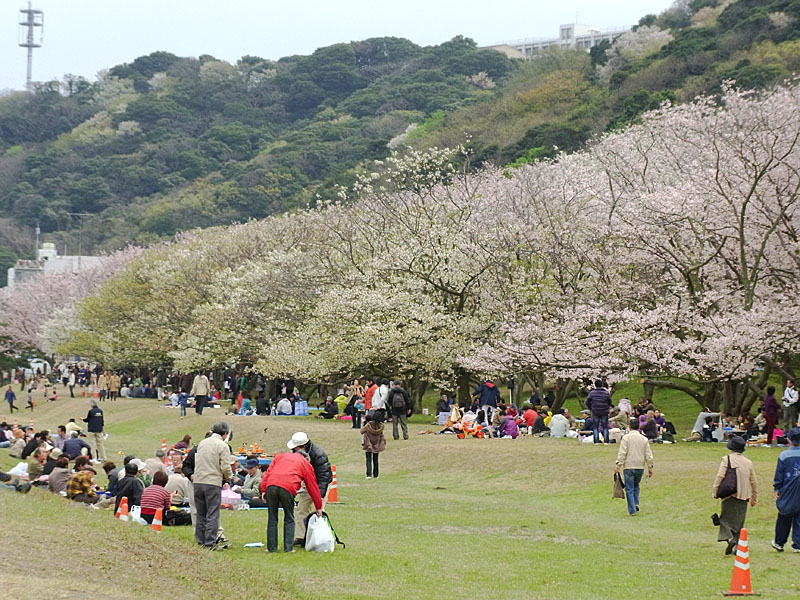 100404走水水源地の桜2