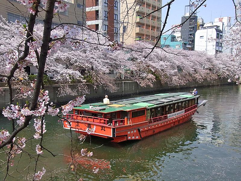 100406大岡川屋形船5